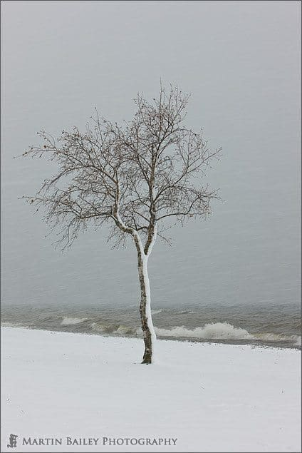 Tree on Wintry Shore