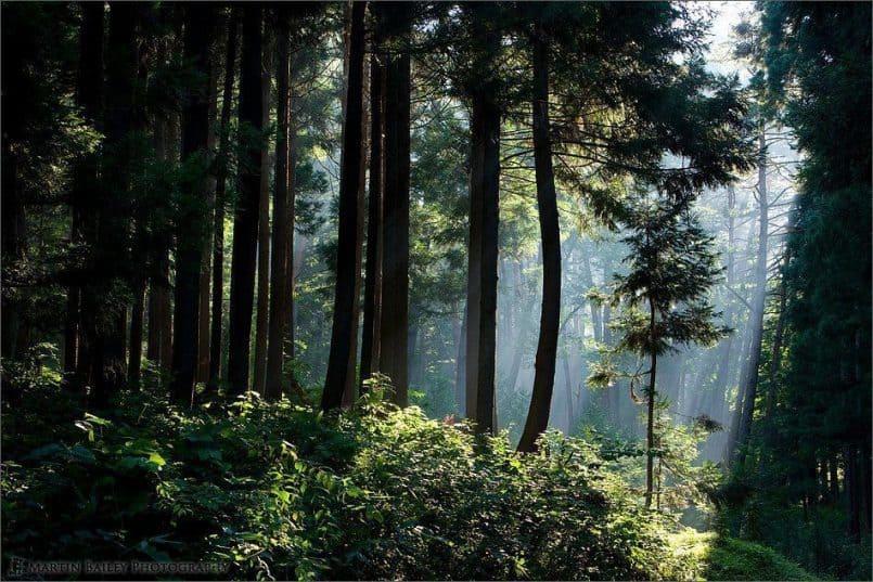Sunlight through Trees #2