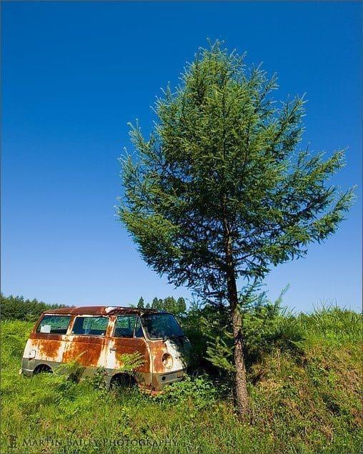 Van, Tree, Sky