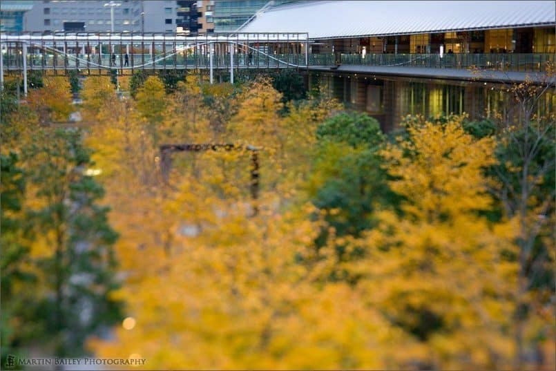 Shinagawa Autumn