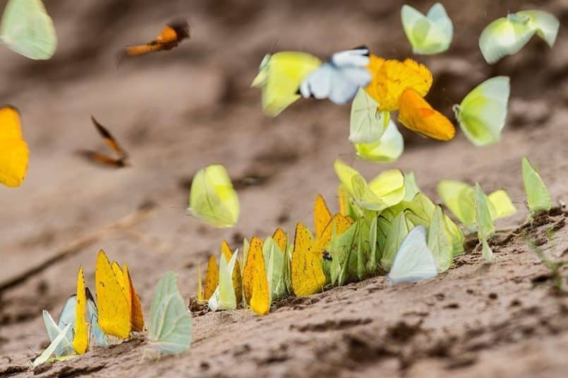 Butterflies-on-sand