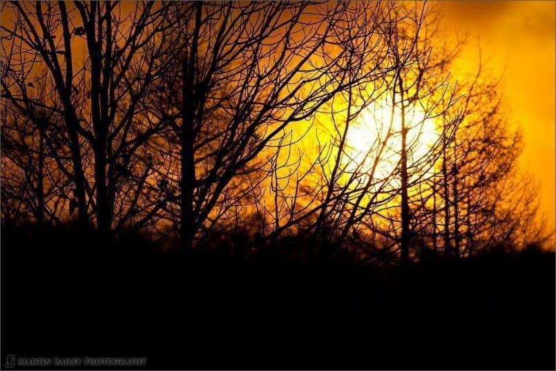Tsurui Sunrise
