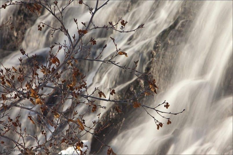 Tree at Oshin Koshin Falls
