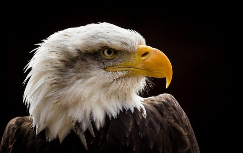 Hawk Conservancy © Neil Graham