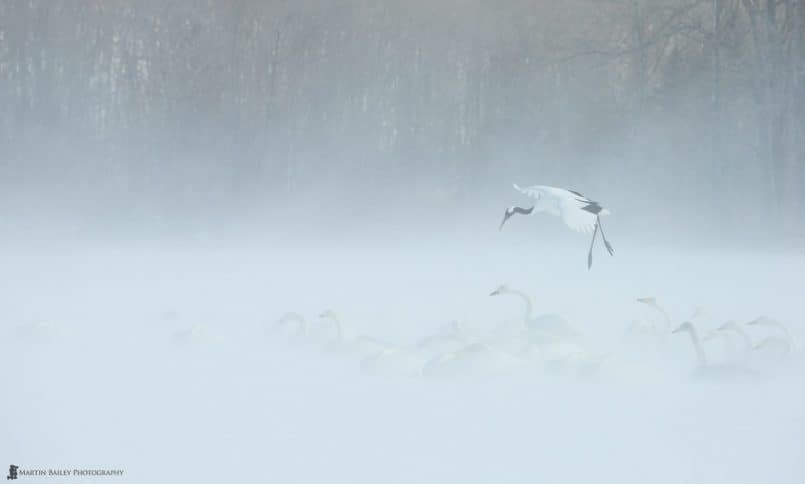 Crane Lands in Snow Storm
