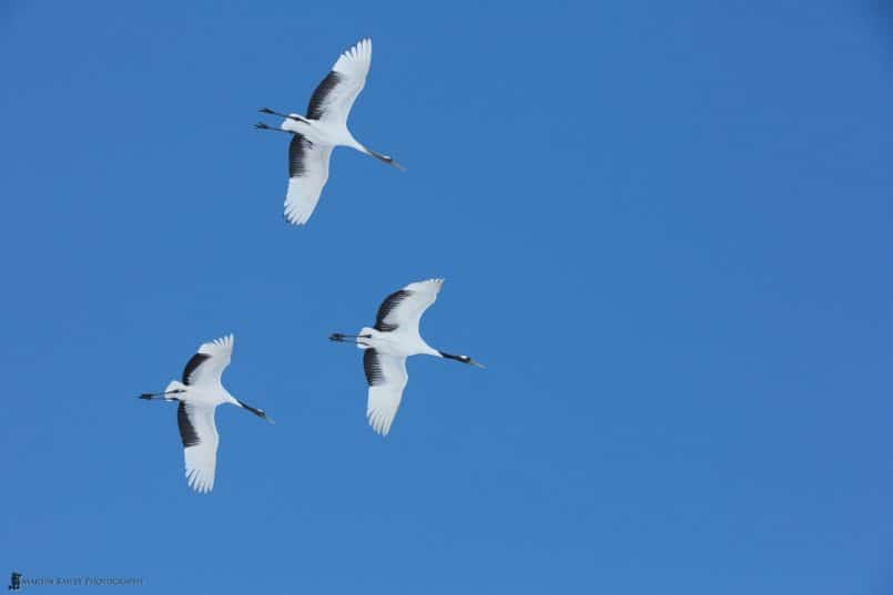 Family Unit in Flight