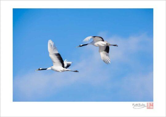 Cranes in Flight 2006