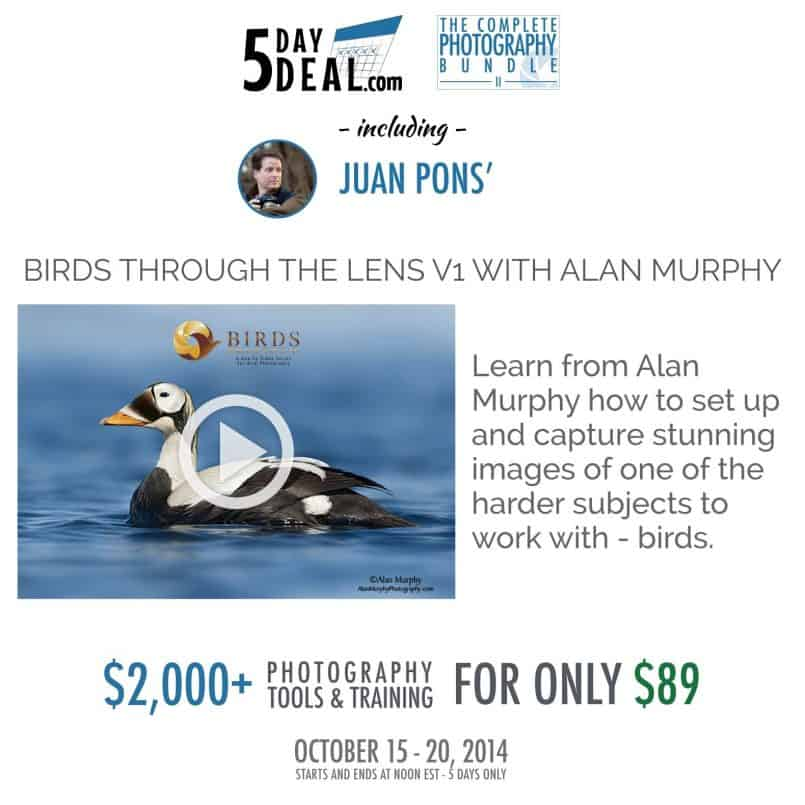 5DayDeal-Juan-Pons-Feature