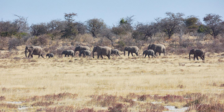 Elephant Procession