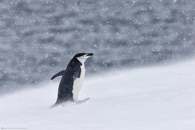 The Land of Snow Return