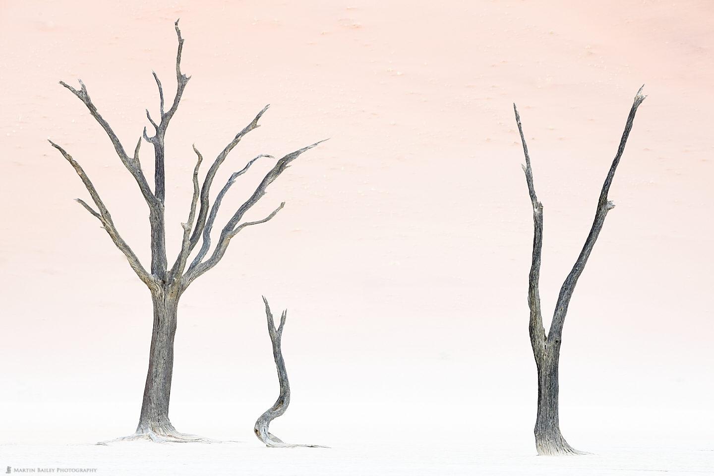 Deadvlei in Sandstorm