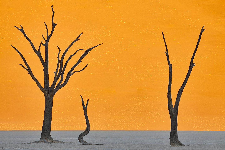 Deadvlei Camel Thorn Tree  Silhouettes #1