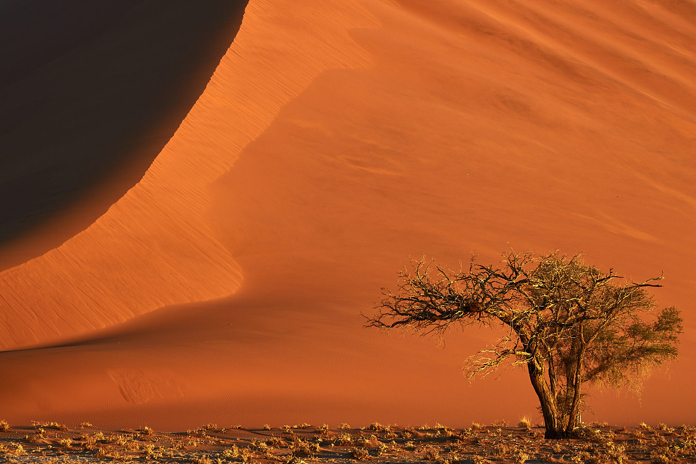 Smoking Dune with Camel Thorn Tree
