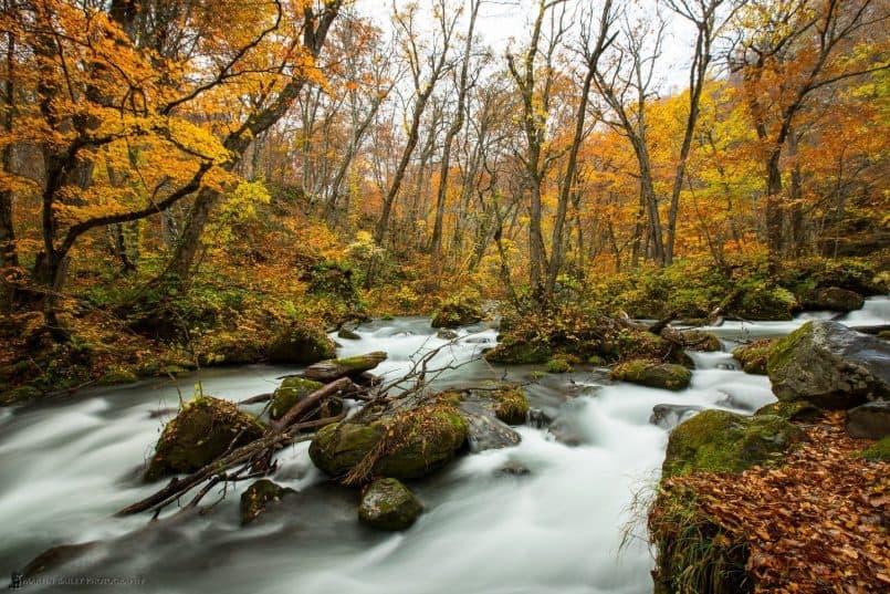 Oirase Keiryu (Mountain Stream)