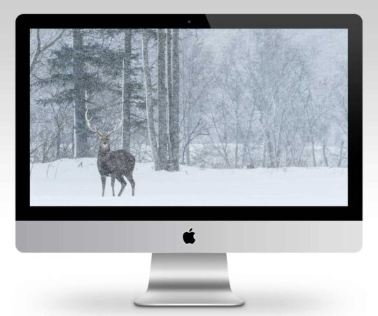 Ezo Deer Stag Wallpaper Mockup