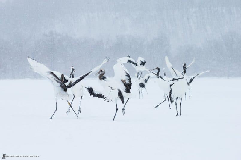 Cranes' Party