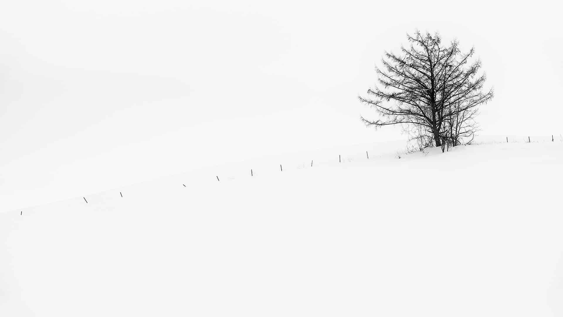 Hokkaido Landscape Photography Adventure