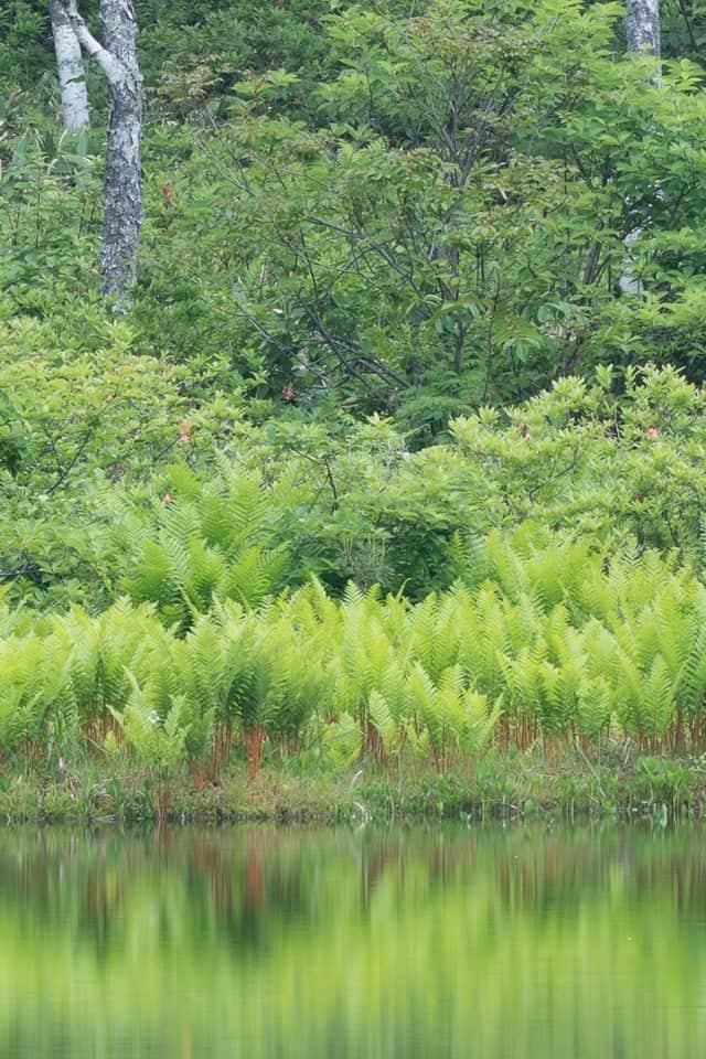 Ichinuma Trees (100% crop)