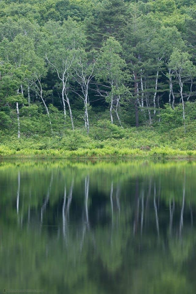 Ichinuma Trees