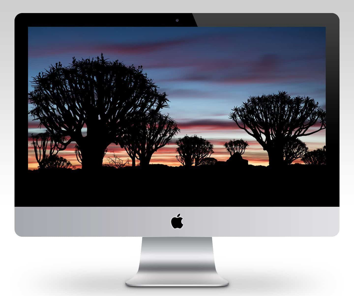 Dusk at Quiver Tree Forest Wallpaper Mockup