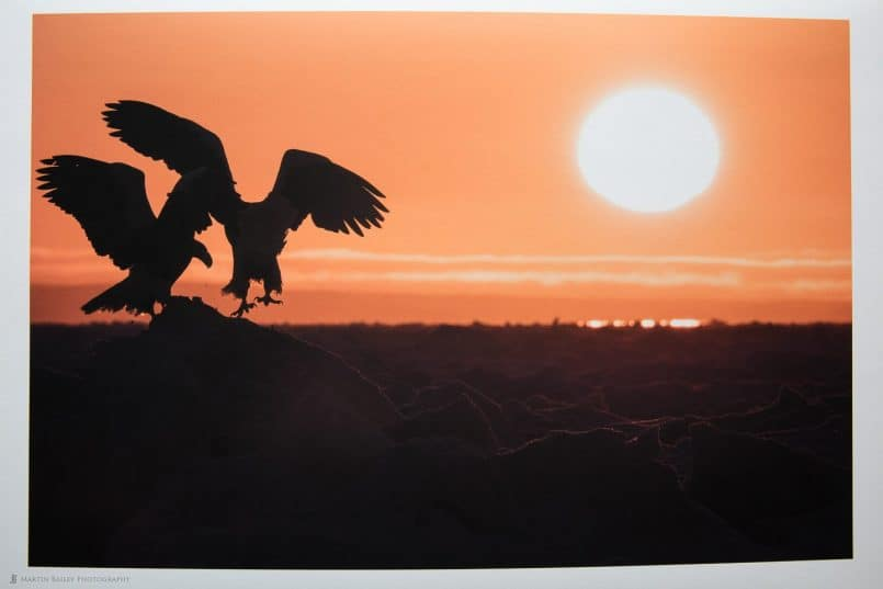 Photo of Eagles Image on Bagasse Smooth