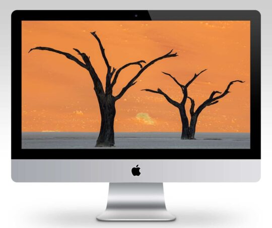 Deadvlei Camel Thorn Tree Silhouettes Wallpaper Mockup