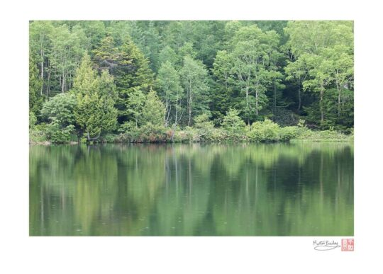 Kidoike Reflection with Rain
