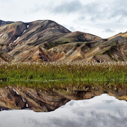 Landmannalaugar with Cotton Grass Reflection