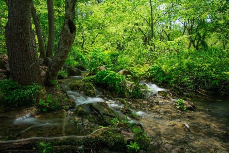 Goshikinuma Stream