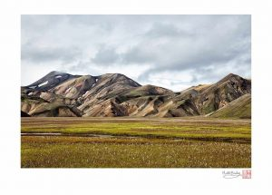 Landmannalaugar with Cotton Grass