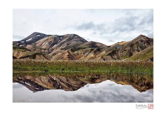 Landmannalaugar Cotton Grass Reflection