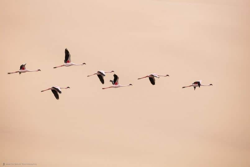 Flamingoes against Dune