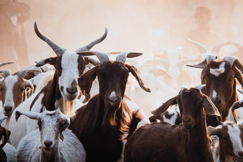 Himba Goat Herding on Breathing Color Pura Bagasse matte media