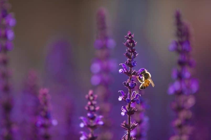 Bee - Omar Gonzalez
