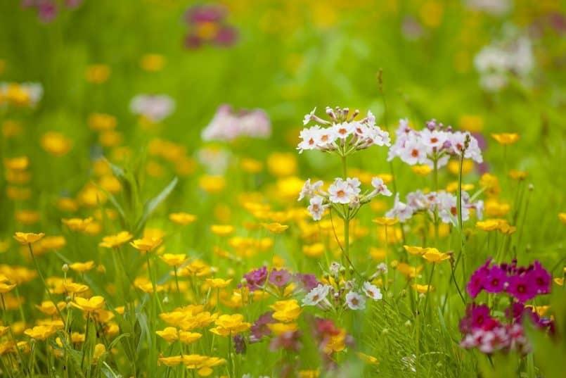 Flowerscape - Omar Gonzalez
