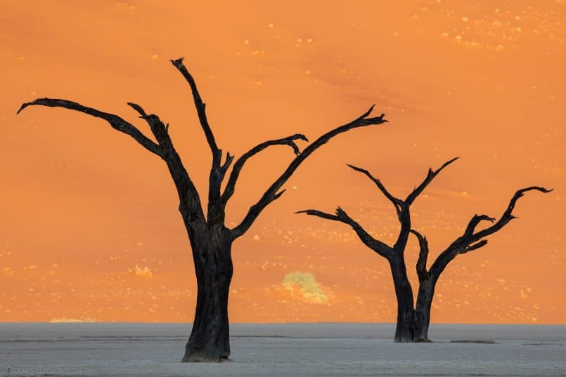 Deadvlei Camel Thorn Tree Silhouettes