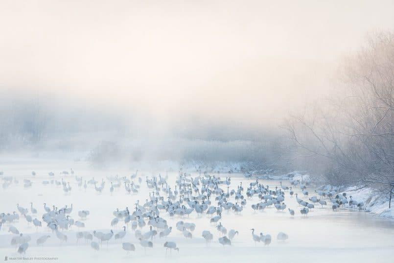 Cranes in Morning Mist