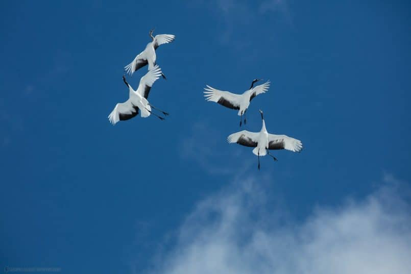 Frolicking Flight