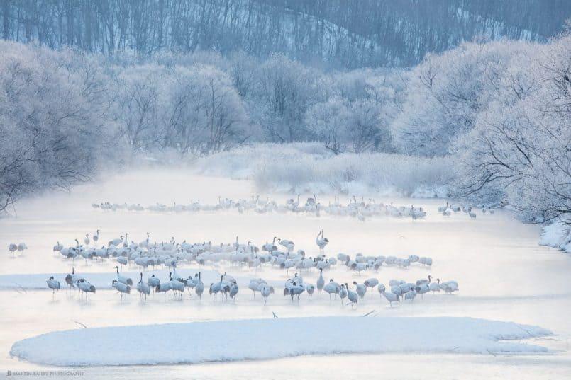 Cranes Awake