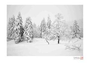 Mount Asahi Trees