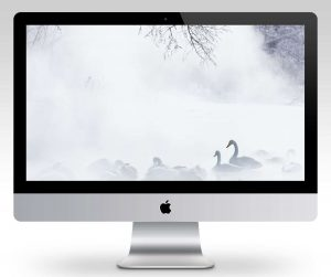 Swans in Mist Wallpaper Mockup