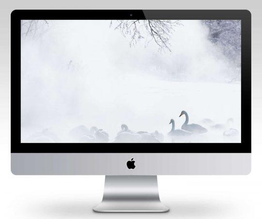 Swans in Mist Wallpaper Mockup