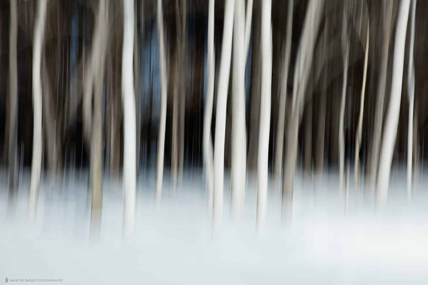 Birch Trees Over Dark Background