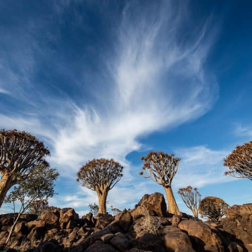 Quiver Trees with Big Sky