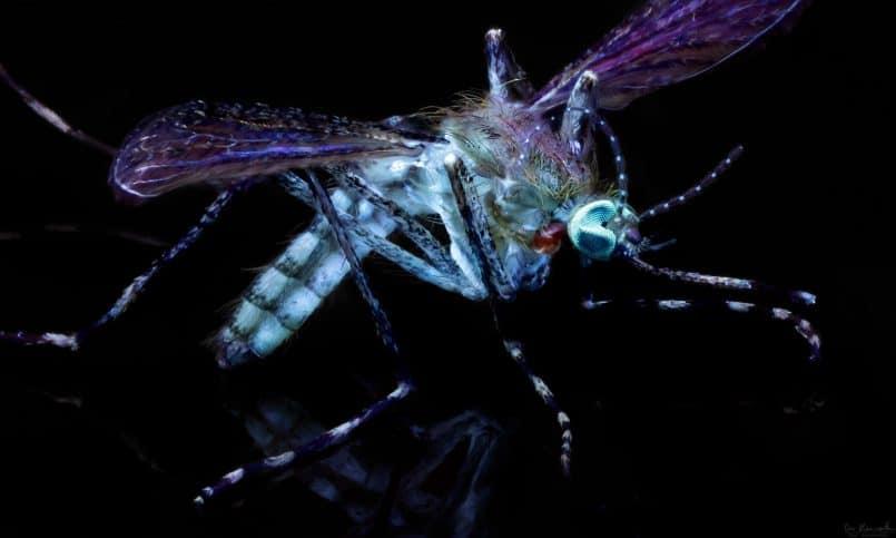 05_mosquito