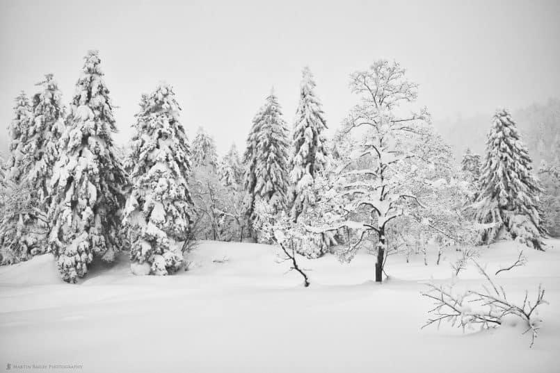 Mount Asahi Trees - Silver Efex Pro