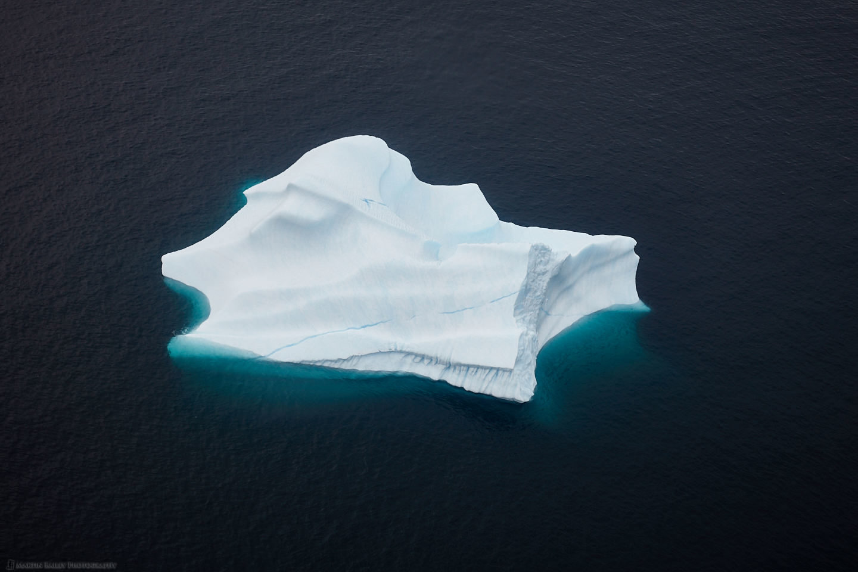 Angel Fish Iceberg