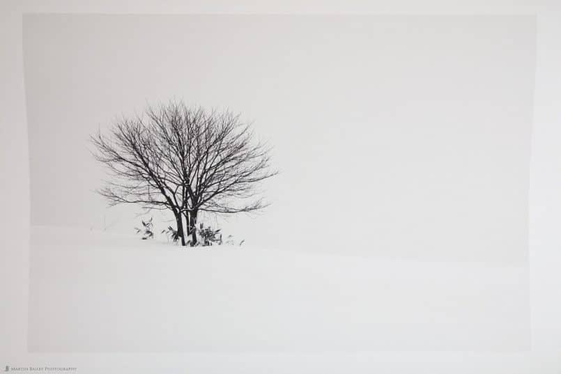 Hokkaido Tree Print on Signa Smooth