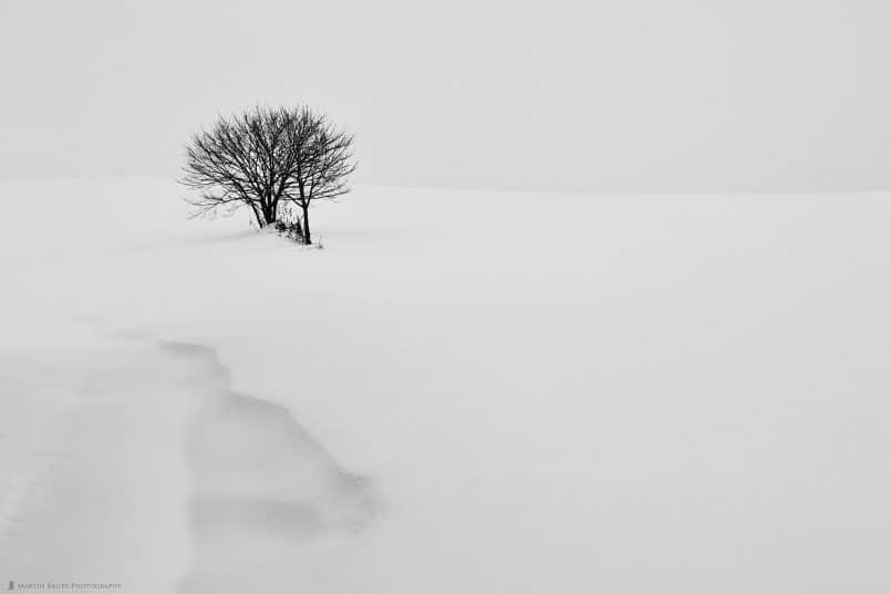 Tree with Snow Drift