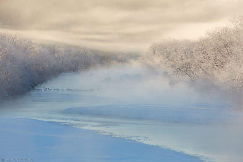 Cranes in River Mist at Dawn